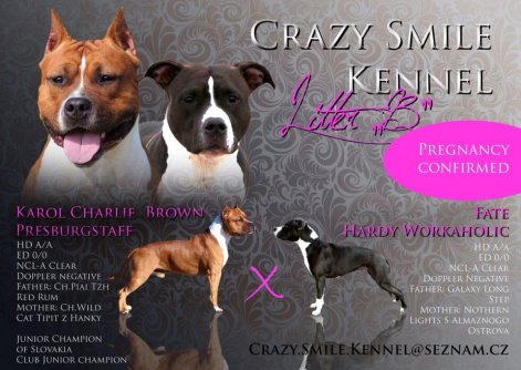 Crazy Smile Kennel Snajdrova